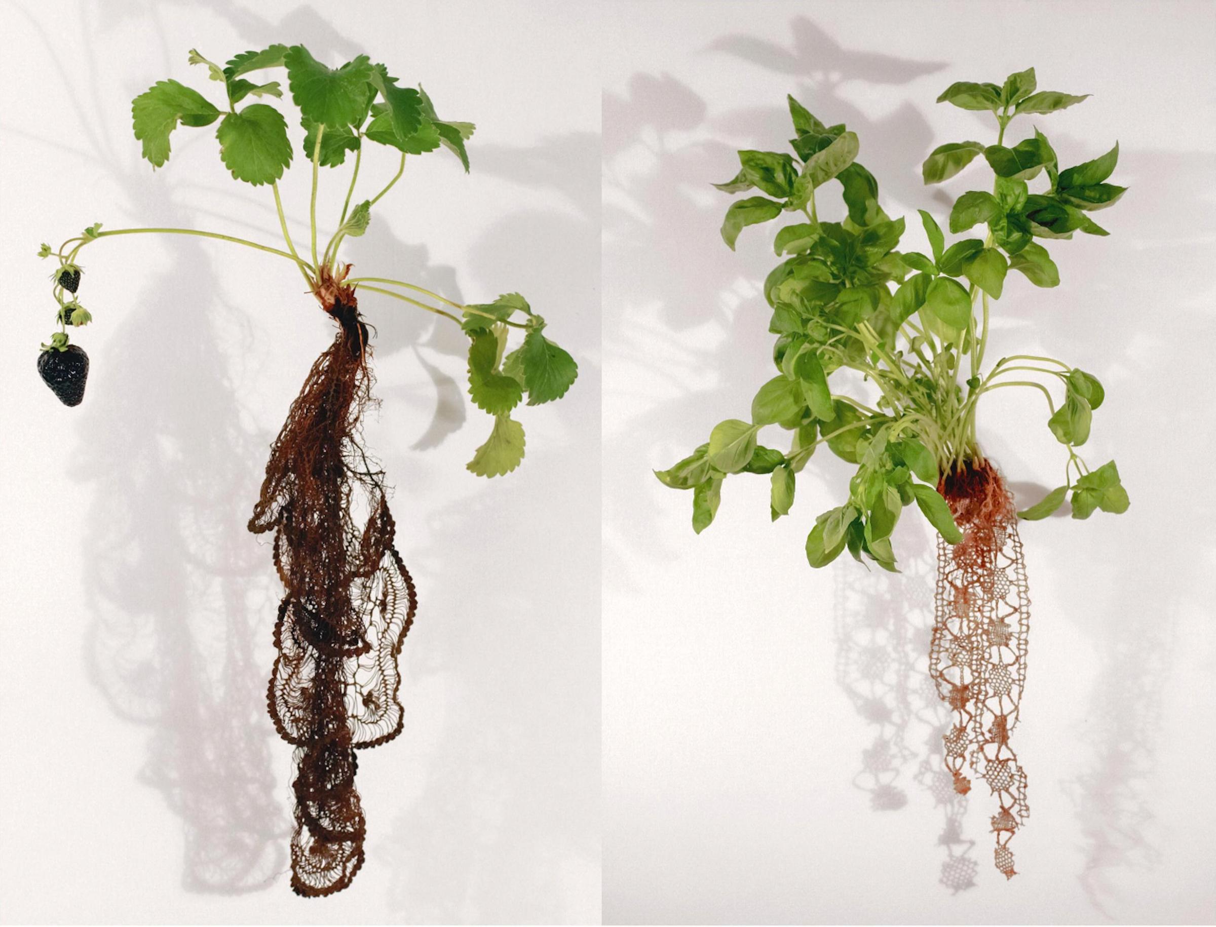 画像: 左から:「Bio-lace series」より「Strawberry Noir」、「Basil n 5」(Carole Collet, 2010-2012)