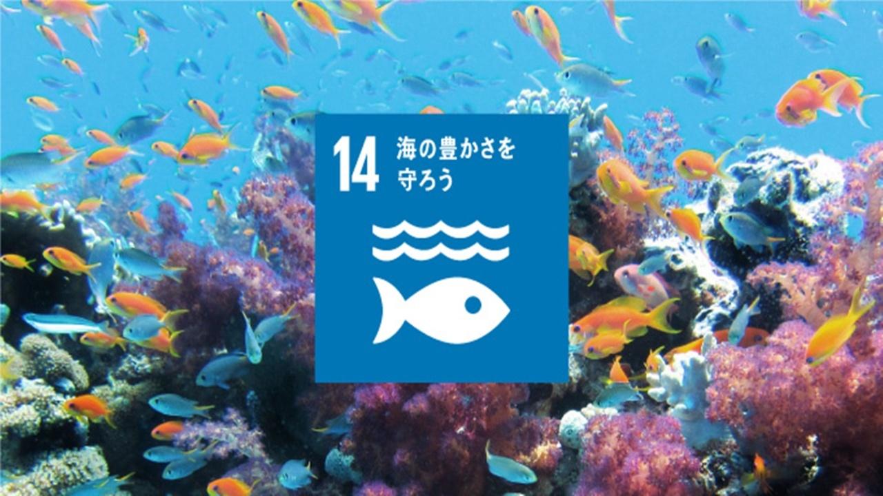 SDGs目標14「海の豊かさを守ろう」の現状と私たちにできること