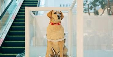 盲導犬の活動を支援
