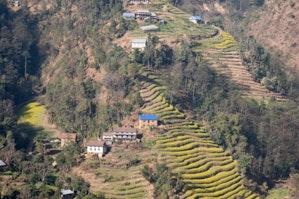 ネパールのコーヒー畑がある風景