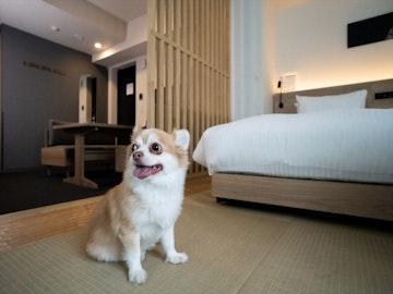 愛犬と一緒に旅行を楽しむ