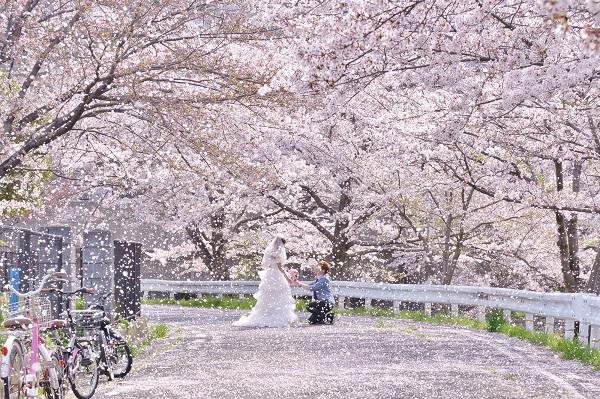 ずっと忘れない…桜の下での告白
