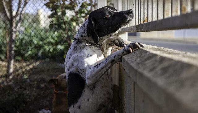 犬の安楽死はなぜ必要?